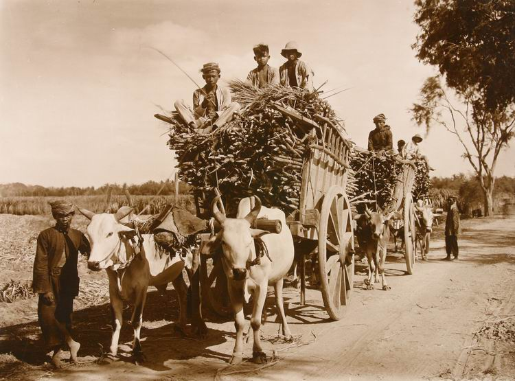transport_suikerriet_kediri_1926